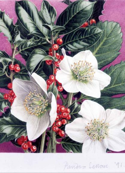 Christmas Rose and Holly
