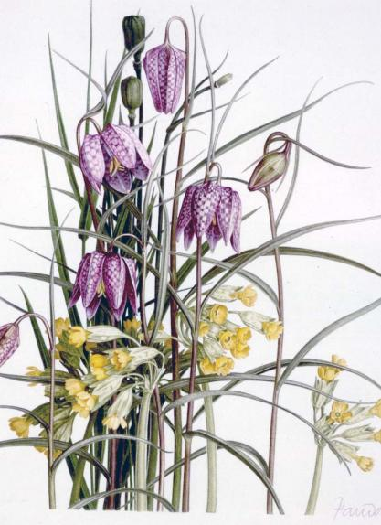 "Snake""s Head Fritillaries & Cowslips"