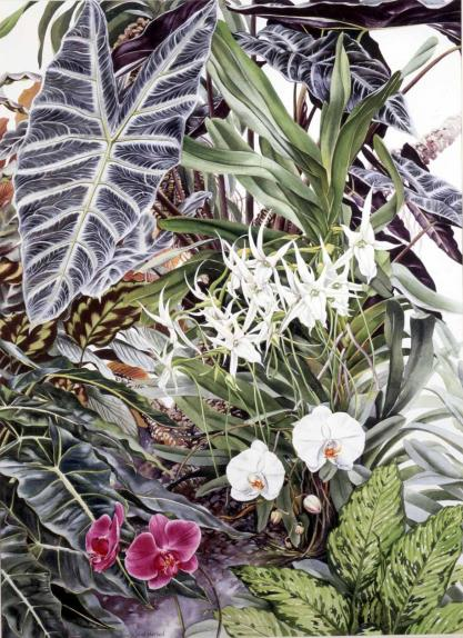 Group of Lowland Tropical Plants