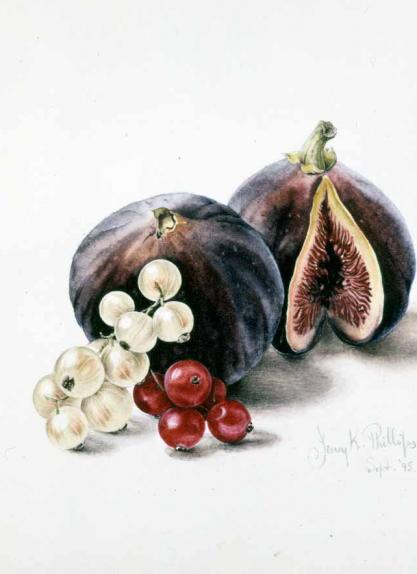 Figs & Currants